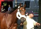 Afleet Alex Arrives at Belmont Park