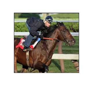 Street Sense on track at Saratoga on August 21st.