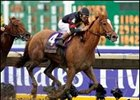 Ginger Punch, winner of the 2007 Breeders' Cup Distaff (gr. I), heads the list of Florida divisional champions.