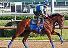 American Pharoah galloped 1 3/16 miles Friday, May 8 at Churchill Downs.