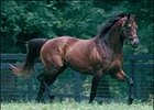 Retired Claiborne Farm stallion Boundary