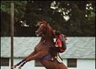 Travers favorite acted up after his exercise Friday.