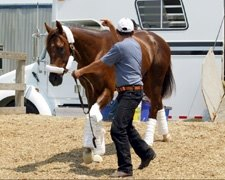 Smarty Arrives at Pimlico