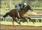 Sweet Catomine gets in final work before Santa Anita Derby.