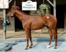 Zounds Sets Fasig-Tipton Midlantic Juvenile and Maryland Record