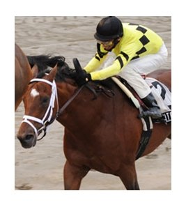 Nite Light is one of 2 entered by trainer Todd Pletcher in the Turfway Park Fall Championship Stakes.