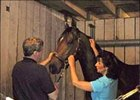 Equine massage therapist Cindy McVey prepares to work on Hard Spun.