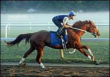 Curlin Works Five Furlongs at Saratoga