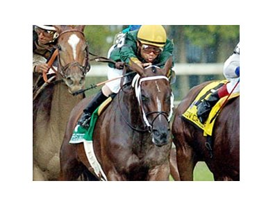 Copper State takes on 10 rivals in the Chilukki Stakes.