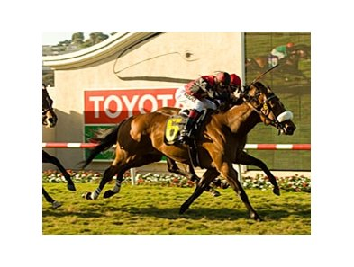"Gotta Have Her, shown winning the 2009 Palomar, tries for a repeat in 2010.<br><a target=""blank"" href=""http://www.bloodhorse.com/horse-racing/photo-store?ref=http%3A%2F%2Fpictopia.com%2Fperl%2Fgal%3Fprovider_id%3D368%26ptp_photo_id%3D8468643%26ref%3Dstory"">Order This Photo</a>"