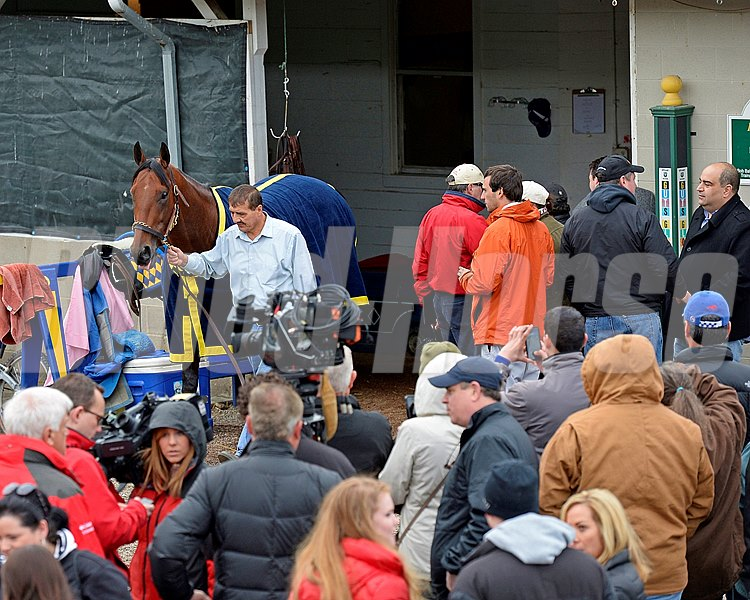 Caption: American Pharoah comes out for a bath viewed by a huge crowd. Horses on the track at Churchill Downs on Sat. April 26, 2015, in Louisville, Ky., in preparation for the Kentucky Derby and Kentucky Oaks. Works4_26_15 image453 Photo by Anne M. Eberhardt