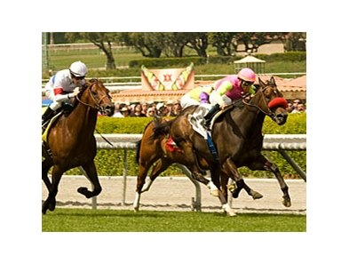 "Compari makes his first start of 2011 in the San Simeon.<br><a target=""blank"" href=""http://www.bloodhorse.com/horse-racing/photo-store?ref=http%3A%2F%2Fpictopia.com%2Fperl%2Fgal%3Fprovider_id%3D368%26ptp_photo_id%3D8874166%26ref%3Dstory"">Order This Photo</a>"