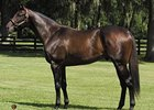 Spanish Steps Sires First Winner