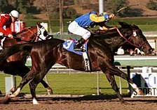Two Time Grade I Winner Dixie Union Retired