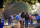 Curlin cools out at Saratoga after his four furlong workout Sept. 22.
