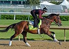 "Firing Line<br><a target=""blank"" href=""http://photos.bloodhorse.com/TripleCrown/2015-Triple-Crown/Kentucky-Derby-Workouts/i-fKsxCJx"">Order This Photo</a>"