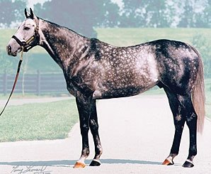 Unbridled's Song's Progeny Shine