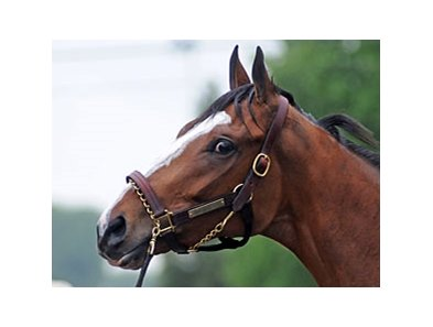 "Will it be the Kentucky Oaks or Derby for Devil May Care?<br><a target=""blank"" href=""http://www.bloodhorse.com/horse-racing/photo-store?ref=http%3A%2F%2Fpictopia.com%2Fperl%2Fgal%3Fprovider_id%3D368%26ptp_photo_id%3D8929837%26ref%3Dstory"">Order This Photo</a>"
