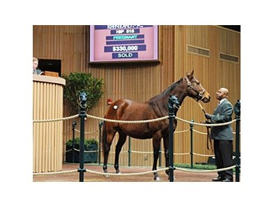 Hip 515 sold for $330,000 at the Keeneland January Sale.