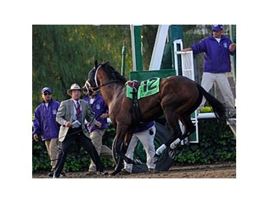 Quality Road was not cooperative during the load of the Breeders' Cup Classic.