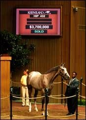 Son of Unbridled's Song Goes for $3.7 million