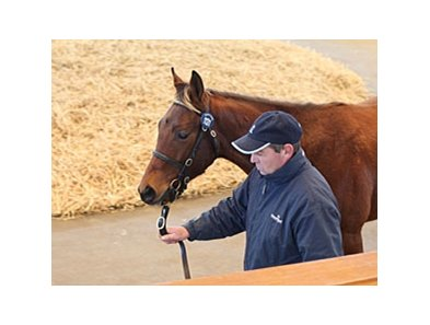 Colt; Tamayuz - Diary by Green Desert was the top seller on the final day of the Tattersalls December Foal Sale, bringing 200,000 guineas.