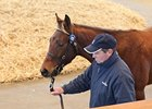 Trade Strong At Tattersalls