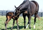 Zenyatta and Foal 2012