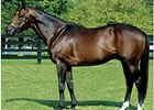 Olmodavor's First Winner