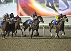Four trials were held at the new Meydan Racecourse a week before opening day of the Dubai Racing Carnival.