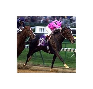 Tiznow, in his dramatic Breeders' Cup Classic victory.