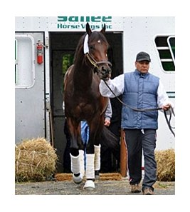 Blame arrives at Belmont on October 1.