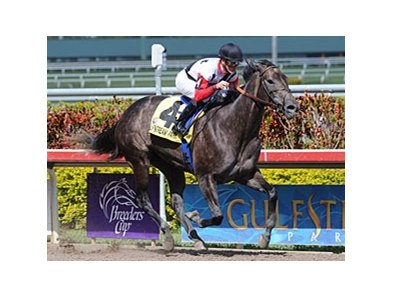 "Warbling gate to wire for jockey Julien Leparoux in the Inside Information Stakes at Gulfstream Park.<br><a target=""blank"" href=""http://www.bloodhorse.com/horse-racing/photo-store?ref=http%3A%2F%2Fpictopia.com%2Fperl%2Fgal%3Fprovider_id%3D368%26ptp_photo_id%3D8840024%26ref%3Dstory"">Order This Photo</a>"