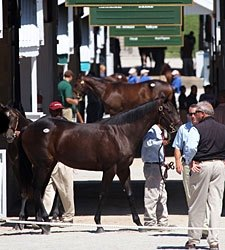 Keeneland Sale Registers Significant Gains