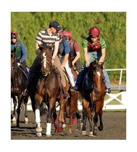 Aidan O'Brien (left) keeps an eye on Rip Van Winkle (right) at Santa Anita on November 4.