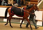 Jacqueline Quest topped the third day of the Tattersalls December Mare Sale at 600,000 guineas.
