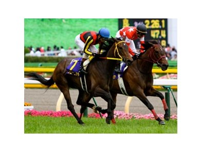 Red Desire edged out favorite Buena Vista in the $2 million Shuka Sho (Jpn-I) at Kyoto Race Course.