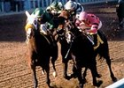 The finish of the 1984 Breeders' Cup Classic (gr. I)