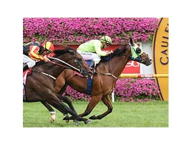 Maldivian captures the CF Orr Stakes Feb. 8.