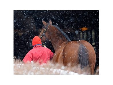 Keeneland 2011 January Sale