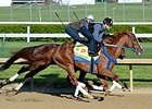 Bold Conquest Works at Churchill Downs 4.27.15.
