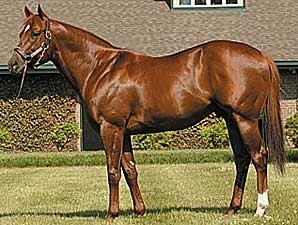 Speightstown Progeny Hot at Calder