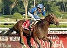"Hopeful winner Majestic Warrior will miss 'Cup.<br><a target=""blank"" href=""http://www.bloodhorse.com/horse-racing/photo-store?ref=http%3A%2F%2Fpictopia.com%2Fperl%2Fgal%3Fprovider_id%3D368%26ptp_photo_id%3D2173856%26ref%3Dstory"">Order This Photo</a>"