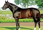 Medaglia d'Oro got his first winner as a stallion May 31 at Calder.