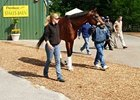 Preakness (gr. I) winner Big Brown leaves the Pimlico stakes barn Monday, May 19 for a trip to Belmont Park.