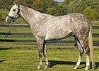 Unbridled Energy's First Foal