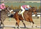 Crossing Point outlasted 9-year-old Say Florida Sandy to win Saturday's $80,550 Paumonok Handicap.