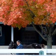 Keeneland Sale Offers Look at First Offspring for Some Sires