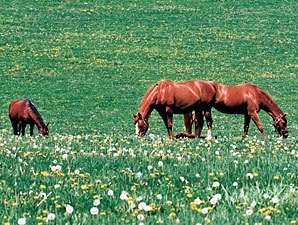 Ban on Horse-Meat Inspection Funds Reversed