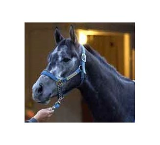 "Haskin: Cause to Believe's ""small, Arabian-like head makes him an attractive and appealing individual."""